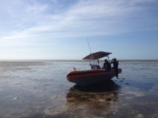 Biogeochemistry and Tides
