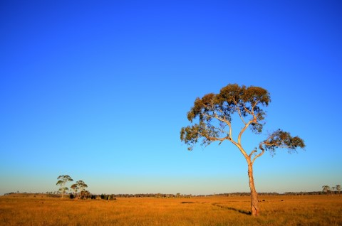 Sap Flow and Drought