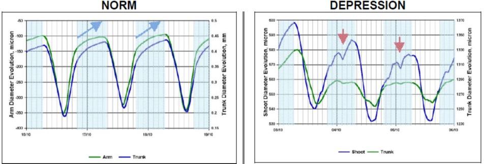 dendrometer LVDT data