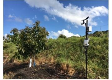 Soil water sensor for avocadoes