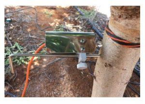 DE-1M Installed on an Almond Trunk