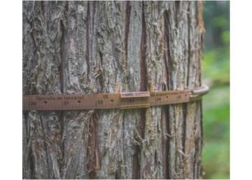 Tree Dendrometer